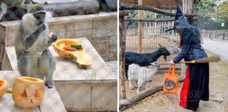 В зоопарке Варны отметили Хеллоуин