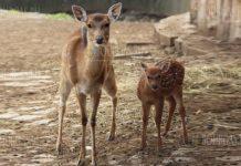 В Софийском зоопарке появился еще один житель