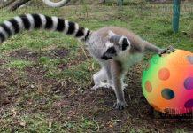 Животные в зоопарке Бургаса получили подарки на Рождество