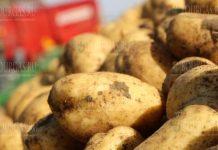 Картофель из Германии в Болгарии продают как болгарский