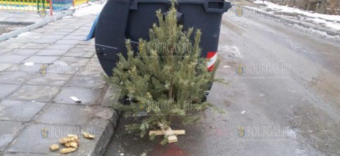 Не выбрасывайте елку в Болгарии