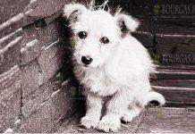 В Софии неизвестные похищают собак