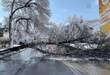 в Шумене упавшие деревья блокировали улицы