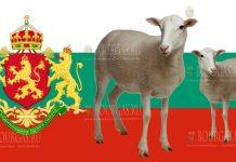 овцы в Болгарии, поголовье овец в Болгарии