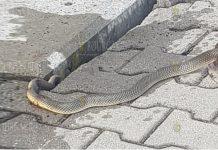 В Болгарии, на вокзале в Караджалово сегодня были замечена змея