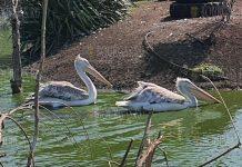 В зоопарке Бургаса появились новые животные