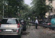 В центре Софии вовремя бури упало дерево